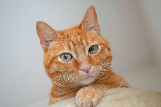 寝転がっている時に思いっきり猫に頭突きされたことはありませんか?たまたま骨なんかに当たったり顔面に頭突きされたりすると結構痛いですよね?