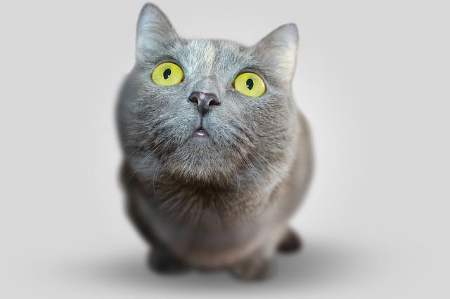 猫 結膜炎 原因 対処法