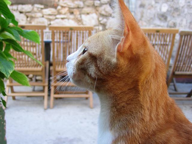 猫 ひげ 切っていいの? 切ってはダメ? 猫のヒゲについて