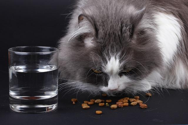 猫 口臭 原因 対処法