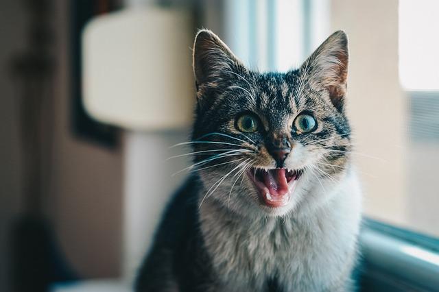猫 毛玉 吐く 原因 対処法