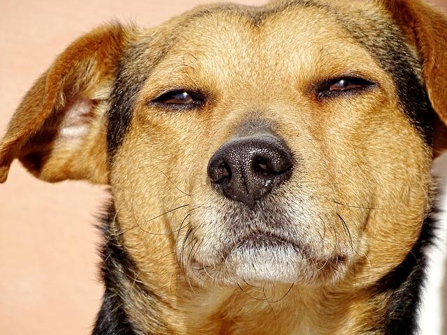 犬 イカ たこ 食べてはいけない なぜ 理由 ポイント