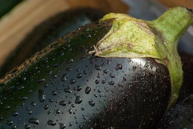 ナス 育て方 栽培方法 園芸 ガーデニング 家庭菜園 ゼヒトモ