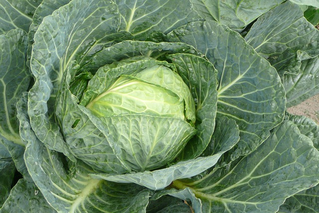 栄養価の高い野菜10選。食べるならこの野菜!【栄養士が執筆 ...