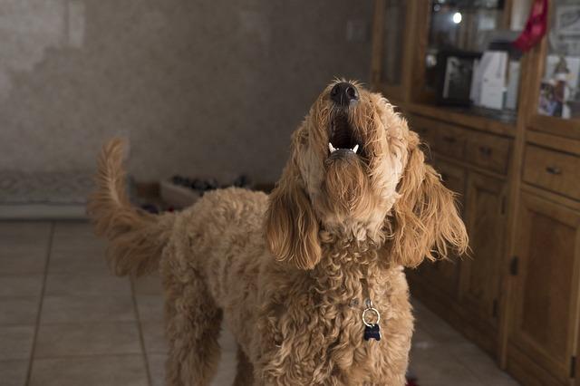 犬 夜泣き ペットシッター ゼヒトモ zehitomo