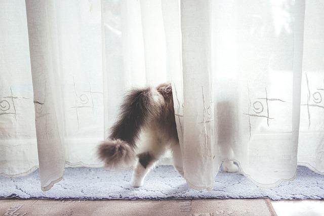カーテン カビ 落とし方 洗濯方法 Zehitomo